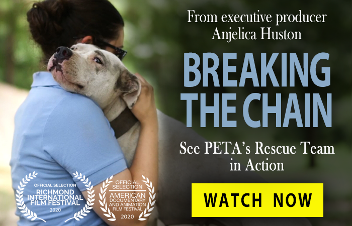 Breaking the Chain - Watch Now