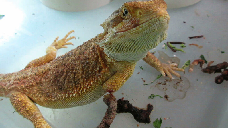 Reptiles Suffer, Left to Die at Another Massive PetSmart Supplier Mill