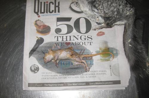 PETA Exposes Abuse at U S  Global Exotics | PETA Investigations