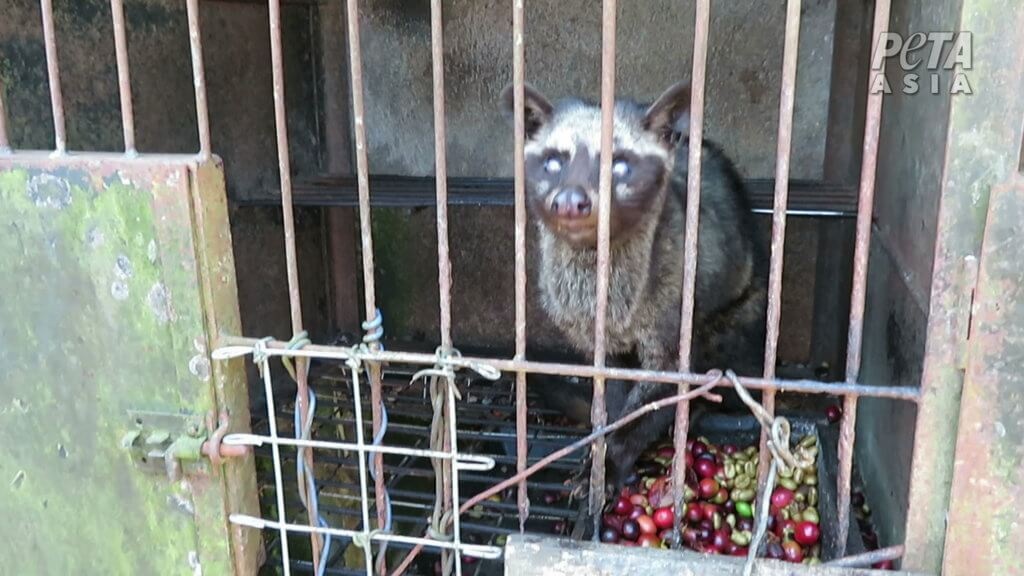 civet cat in a cage