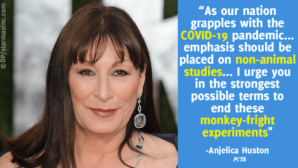 Anjelica Huston Calls out NIH Monkey Experiments