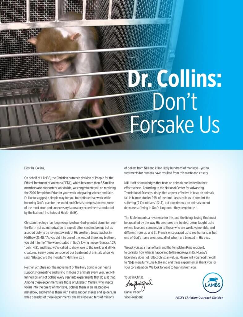 PETA LAMBS NIH Monkey Experiments Ad