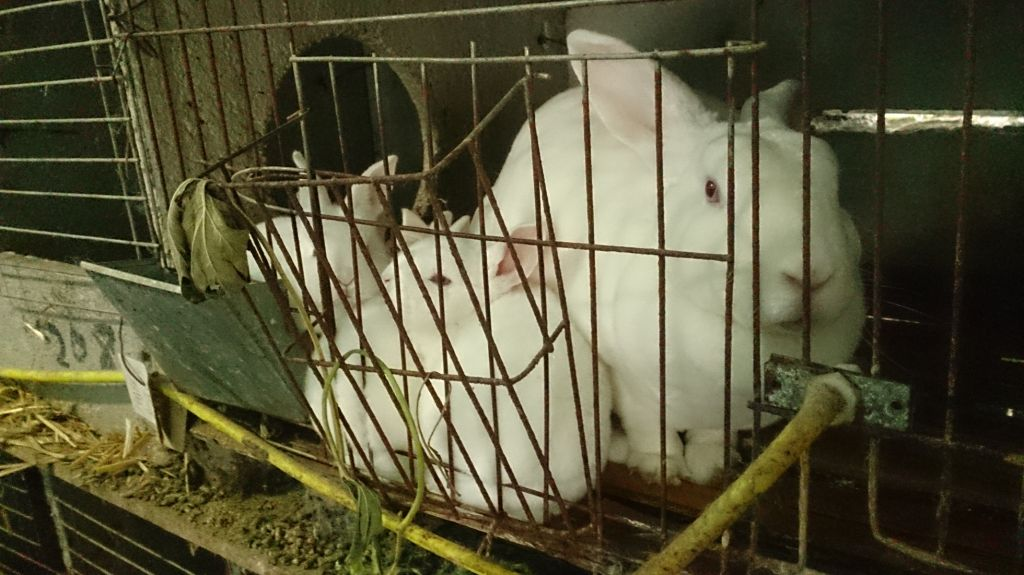 Rabbits Hit, Hung Up, and Skinned Alive in the Chinese Fur ...